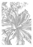 KEK Amsterdam Engraved Flowers II WP.328 (Met Gratis Lijm)_