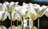 Bloemen & Planten Fotobehang 1101P8_