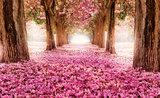 Bomen & Bladeren Fotobehang 851P8_