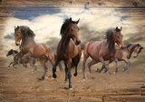 Paarden Fotobehang 10083P8_