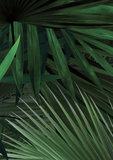 KEK Amsterdam Palm leaves WP.501 (Met Gratis Lijm)_