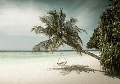 Strand Palmboom Fotobehang 13344P8