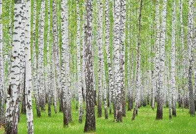 Bomen & Bladeren Fotobehang 157P8
