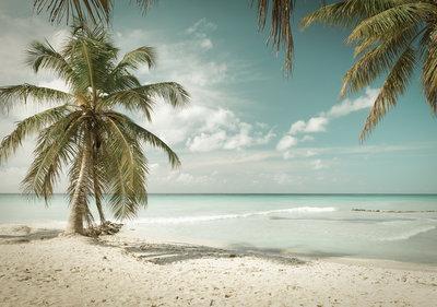 Strand Palmboom Fotobehang 13347P8