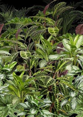 Botanisch Vlies Fotobehang AK1063 (Met Gratis Lijm!)