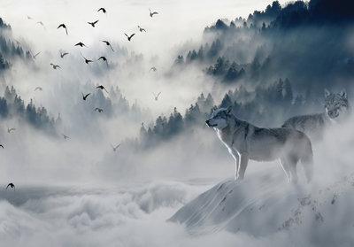 Wolf in de bergen Fotobehang 12395P8