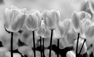 Bloemen & Planten Fotobehang 287P8