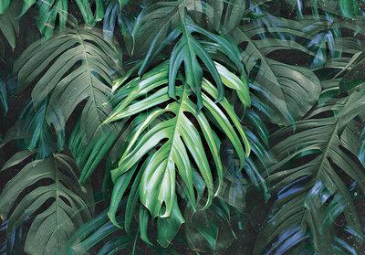 Jungle Fotobehang 13711P8