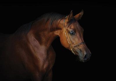 Paard Fotobehang 13602P8
