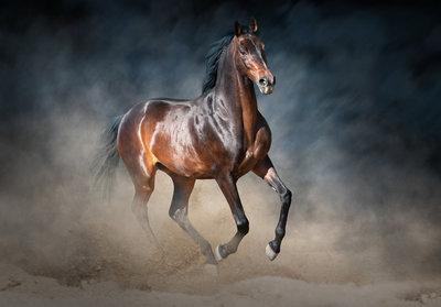 Paard Fotobehang 13600P8