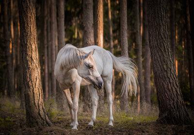 Paard Fotobehang 13599P8