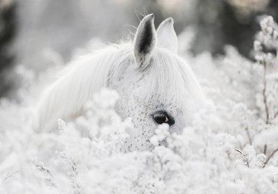 Paard Fotobehang 13598P8