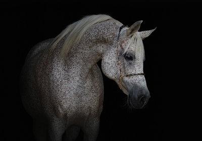 Paard Fotobehang 13596P8
