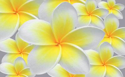 Bloemen & Planten Fotobehang 033P8
