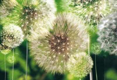 Bloemen & Planten Fotobehang 056P8