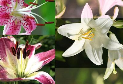 Bloemen & Planten Fotobehang 076P8