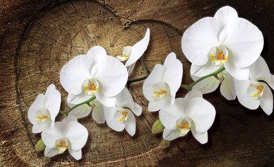 Bloemen & Planten Fotobehang 1014P8