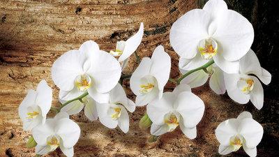 Bloemen & Planten Fotobehang 1017P8