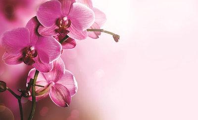 Bloemen & Planten Fotobehang 1033P8