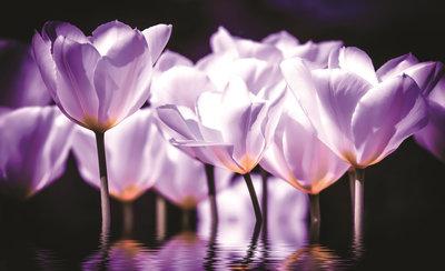 Bloemen & Planten Fotobehang 1104P8