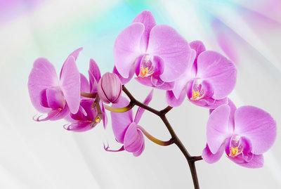 Bloemen & Planten Fotobehang 116P8