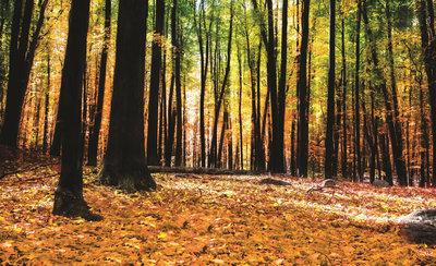 Bomen & Bladeren Fotobehang 1220P8
