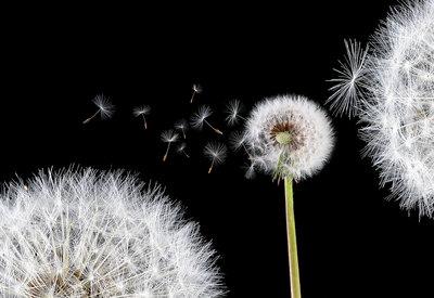 Bloemen & Planten Fotobehang 125P8