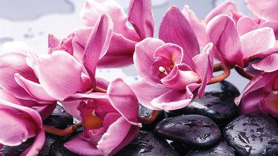 Bloemen & Planten Fotobehang 1337P8