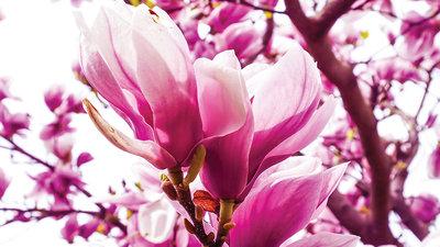Bloemen & Planten Fotobehang 1341P8
