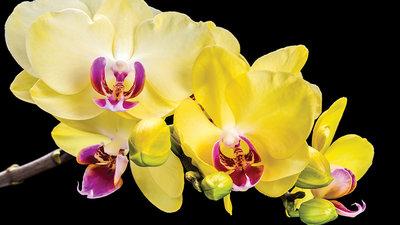 Bloemen & Planten Fotobehang 1343P8