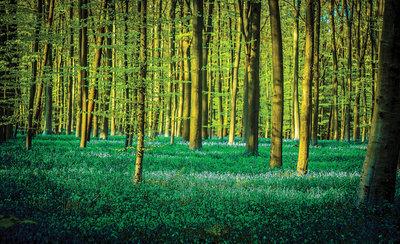 Bomen & Bladeren Fotobehang 1438P8