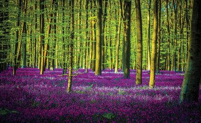 Bomen & Bladeren Fotobehang 1439P8