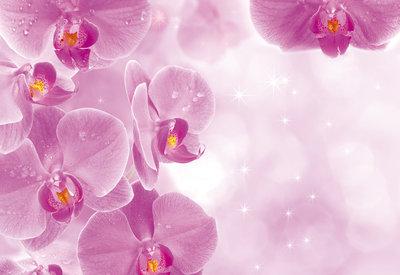 Bloemen & Planten Fotobehang 149P8