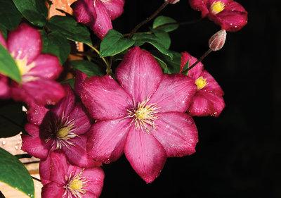Bloemen & Planten Fotobehang 1556P8