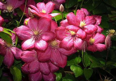 Bloemen & Planten Fotobehang 1557P8