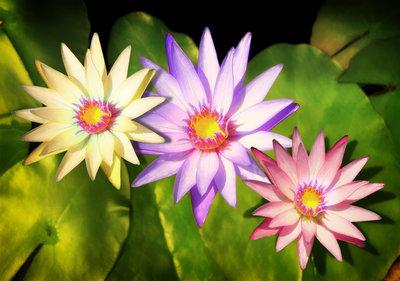 Bloemen & Planten Fotobehang 1558P8