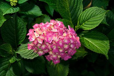 Bloemen & Planten Fotobehang 1561P8