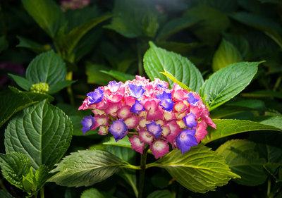 Bloemen & Planten Fotobehang 1562P8