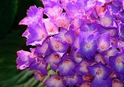 Bloemen & Planten Fotobehang 1563P8