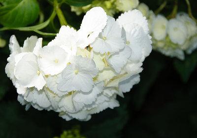 Bloemen & Planten Fotobehang 1564P8