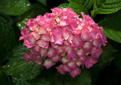 Bloemen & Planten Fotobehang 1565P8
