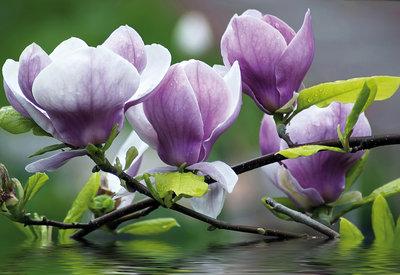 Bloemen & Planten Fotobehang 160P8