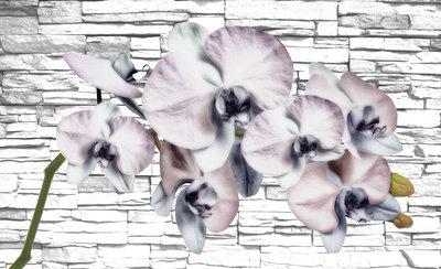 Bloemen & Planten Fotobehang 1605P8
