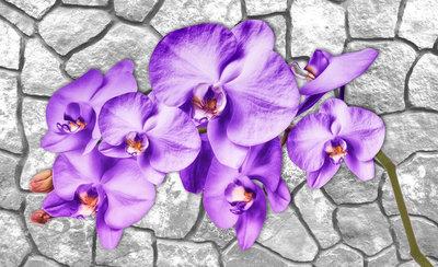 Bloemen & Planten Fotobehang 1606P8