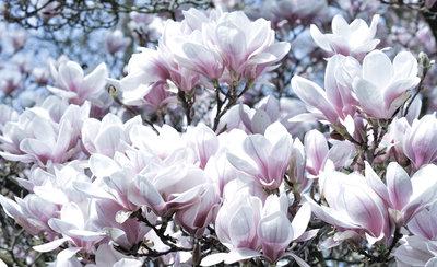 Bloemen & Planten Fotobehang 1618P8