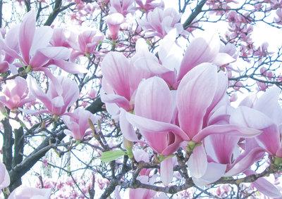 Bloemen & Planten Fotobehang 1619P8