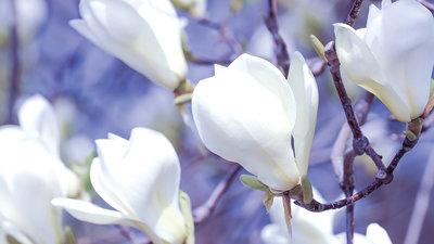 Bloemen & Planten Fotobehang 1620P8