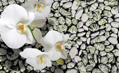 Bloemen & Planten Fotobehang 1651P8