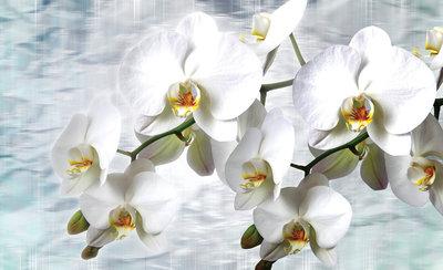 Bloemen & Planten Fotobehang 1667P8