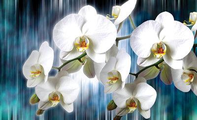 Bloemen & Planten Fotobehang 1668P8